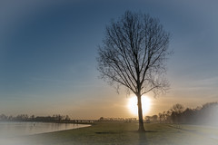 Tree (in explore 04/01/2017) (RobMenting) Tags: 70d eos sunset sky blue roermond tree canon canoneos70d