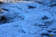 A-LUR_5720 (ornessina) Tags: trasimeno umbria byrd uccelli aironi cormorani toscana va orcia