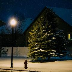 Winter Tree (Austin Hudson) Tags: tree snow winter lamp street