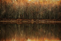 Shoreline-HSS (VarietyHour) Tags: slidersunday water reflection river trees outdoor landscape serene