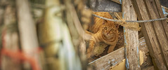 Hi (Isien Kuo) Tags: taiwan penghu qimei township island cat outdoor animal wild photography moment day travel fujifilm xpro2 xpro xmount carlzeiss zeiss touit2850m 50mm 28 macro planar 台灣 澎湖 七美 野貓 貓 流浪貓 富士 動物 戶外 旅遊 touit