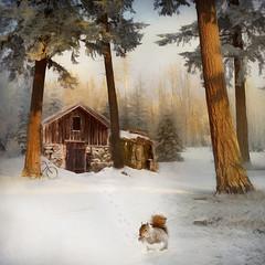 Winter Fantasy (BirgittaSjostedt- away for a while.) Tags: winter snow forest wood tree house bike squirrel ight texture paint creative creation birgittasjostedt magicunicornverybest outdoor