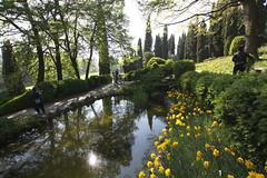 _DSC0828 (Riccardo Q.) Tags: parcosegurtàtulipani places parco altreparolechiave fiori tulipani segurtà