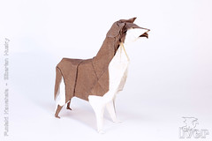 Fumiaki Kawahata - Siberian Husky (IverRu) Tags: iver kawahata dog hasky origami кавахата собака хаски оригами