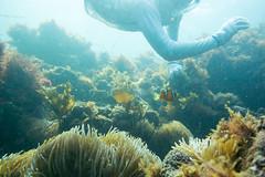 20150808-DSC_4572.jpg (d3_plus) Tags: sea sky fish beach japan scenery underwater diving snorkeling  shizuoka    apnea izu j4  waterproofcase    skindiving minamiizu       nikon1 hirizo  1030mm  nakagi 1  nikon1j4 1nikkorvr1030mmf3556pdzoom beachhirizo misakafishingport  1030mmpd nikonwpn3 wpn3