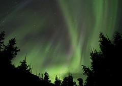 AuroraOverCedars (NickABowman) Tags: sky night forest photography lights nikon astro national northern d600 tongass