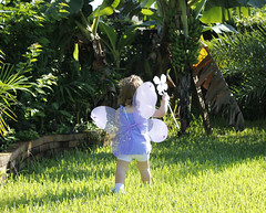 Fairy Wings02_R (Jennifer Kaczor) Tags: baby fairywings