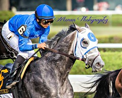 Frosted (EASY GOER) Tags: horses horse ny newyork sports race canon track saratoga upstate running racing 5d athletes races thoroughbred equine thoroughbreds travers markiii