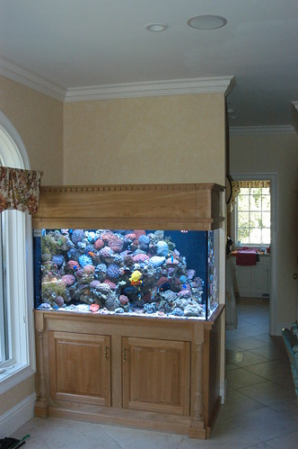 225 Gal Custom Living Reef - Private Residence - CT - 2