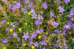 Flowers field
