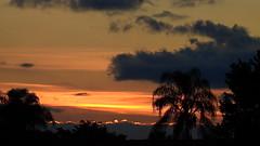 Columbus Day Sunset (Jim Mullhaupt) Tags: pink blue sunset red wallpaper sky orange sun color tree weather silhouette yellow clouds landscape gold evening nikon flickr sundown florida dusk palm exotic p900 tropical coolpix columbusday bradenton endofday cloudsstormssunsetssunrises jimmullhaupt