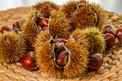 Chestnuts (gabbiere61) Tags: autumn food brown tree fall nature closeup fruit rural season healthy october warm raw natural sweet maroon traditional rustic seasonal nuts shell seed tasty capsule fresh marroni september gourmet chestnuts bunch chestnut organic nut thorn wicker marron roasting peeled spiked roasted nutrition chesnuts castanea sweetchestnut forestfruit castaneasativa sweetchestnuts