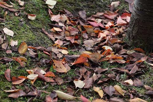 枯れ葉舞う道