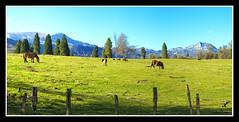 URKIOLA ......Pano 5 Fotos Verticales (MONTXO-DONOSTIA) Tags: mountains color verde landscape caballos paisaje montes zaldiak mendiak urkiola montxodonostia