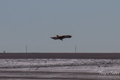 Bald Eagles Battle in the Air - 10 of 12