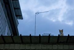 151130 - Vantage (y_leong23) Tags: cat dlux