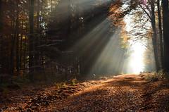 DSC_8586 May it be ....A Fairytale... (baerli08ww) Tags: autumn light mist fog forest germany landscape deutschland licht nikon nebel herbst natur autumncolors landschaft wald rheinlandpfalz westerwald herbstfarben rhinelandpalatinate westerforest