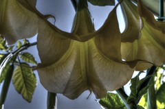 Sous le parapluie (ValMi2012) Tags: fleurs hdrenfrancais