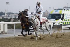 التنافس بين المتسابقين في سباق المسيلة (Qatar National Day) Tags: درب سباق المسيلة الساعي اليومالوطنيقطر قطر18ديسمبر 18decqatar qnd2015