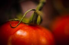 Artistic: Red (ChristinaWieck) Tags: dogwood52 dogwoodweek3 tomate red rot tomato artistic nikon weeklymarket