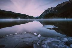 Lake Ice & Mist (Atmospherics) Tags: winterlight refelection lakereflection winterscene snowintrees lowlight landscape canada atmospherics buntzenlake lakeice bclandscape