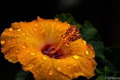 H    ( Explore 12/18/16 ) (Gary P Kurns Photography) Tags: onone spring nikon flowers d800 closeup flowersplants events 105macro oklahoma places macro