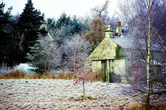 Beside the Lochan. (artanglerPD) Tags: winter sunshine beside lochan frosty weather trees berries house shed