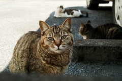 neko-neko1629 (kuro-gin) Tags: cat cats animal japan snap street straycat 猫 sigma dp2