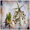 (2435) Plantes d'aire (QuimG) Tags: plantadaire macro natura nature naturaleza textures panasonic quimg quimgranell joaquimgranell afcastelló specialtouch obresdart