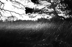Dream on friends (Marcel Bakker) Tags: dream forest like