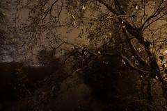 Orillas del Arga (Esther Goroskieta) Tags: árboles naturaleza niebla luces noche nature night serenity fog tree bucólico bucolic