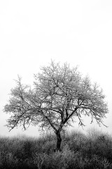 WINTER 01 (Raphaël Melloul) Tags: noir blanc black white winter hiver france bestoftheday beautiful photographer photographies photos photographe photography photo picoftheday photograph tree alone dark raphael melloul nikon nikkor nn nikond800 night nikontop nikonfr nature