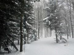 la montagna, la neve e la nebbia (Massimo Luca Carradori) Tags: montagna neve nebbia mountain snow fog massimolucacarradori massimocarradori carradorimassimo inverno winter bianco white