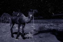 nuit etoilee dromadaire (bernardmorel) Tags: m24