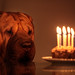 1, 2, 3... 9! (Y. Robbins) Tags: sharpei dog birthday cake candles happybirthday healthy counting littledoglaughedstories