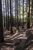IMG_0440 Redwoods track and Duffy (roseyposey2009) Tags: te mata redwoods canon m5 tokina 11 16 28 tematapeakredwoodscanonm5