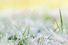 'Jaggies' (Jonathan Casey) Tags: winter norfolk d810 nikon zeiss 135mm carlzeiss