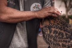 Love the owl (Nourah.A.Edhbayah (Super Flower♥إظبيه)) Tags: طائر بومه بوم اظبيه عبدالله نوره edhbayah abdullah nourah q8 kuwait owl love