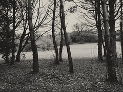 2017-02-16_05-32-27 (niknak2016) Tags: woods forest forestpark hills hill treelife tree trees baretrees bare baretree winter seasons outside outdoors beautyinnature naturalbeauty nature natural naturephotography scenery scenics blackandwhite monochromephotography monochrome blackandwhitephotography