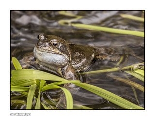 Frog-eyed reflections [Explored]