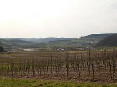 P1030138 (Unterwegs im Trierer Land) Tags: kanzem wiltingen saarbogen