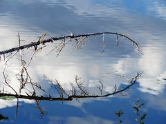 Reflections @ Spout Lake (ISO 69) Tags: canada reflection tree water see wasser britishcolumbia elements reflexion spiegelung kanada seee spoutlake