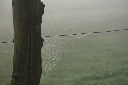 Spider web with morning dew 2