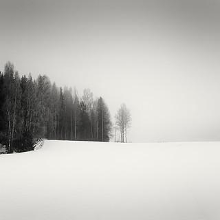Piece of Winter Woods