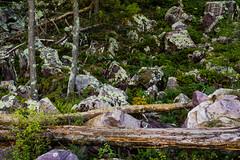 Devils Lake Vignette (jrobfoto.com) Tags: wood tree wisconsin us rocks raw unitedstates sony boulders fallen trunk lichen algae fullframe alpha fell wisconsindells devilslake baraboo facebook lightroom twitter 500px a7r tumblr