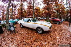 Pumpkin Run 00104