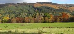 Autumn Colours, Strath Eachaig (Russardo) Tags: autumn scotland colours argyll cowal strath eachaig stratheck