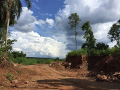 Always to the top. (josemqui) Tags: naturaleza tree green love apple nature argentina clouds cool vive view cloudy near palmeras palm dirt hd iguazu misiones iphone andresito siente