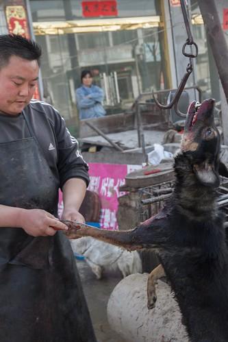 hundepelz aus china