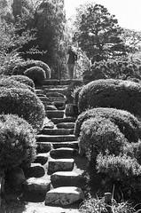 Shukkeien, Hiroshima (MCorrigan1983) Tags: bw japan 50mm nikon hiroshima nikkor kodaktmax400 nikonf6 2015 shukkeien nikkor50mmf18d 400tmx